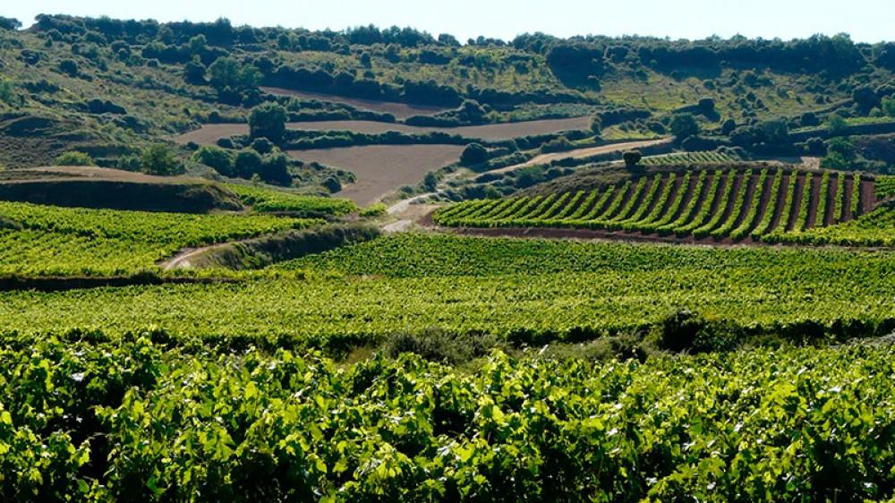 Campos y Viñas